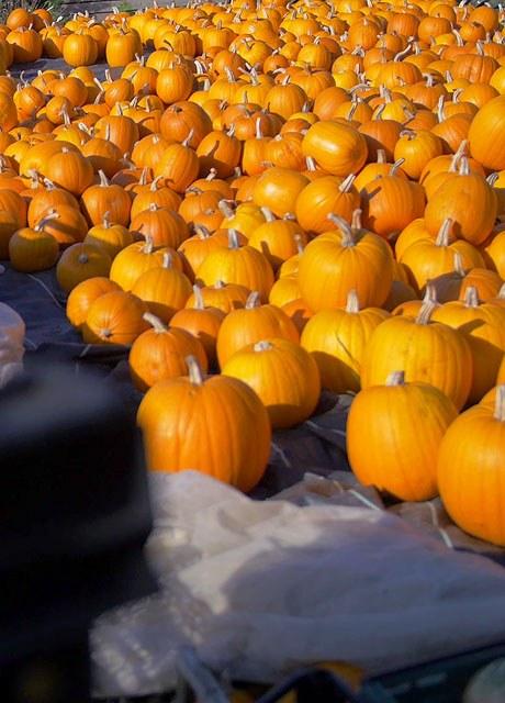 Cobbs Farm Shop Pumpkins Display