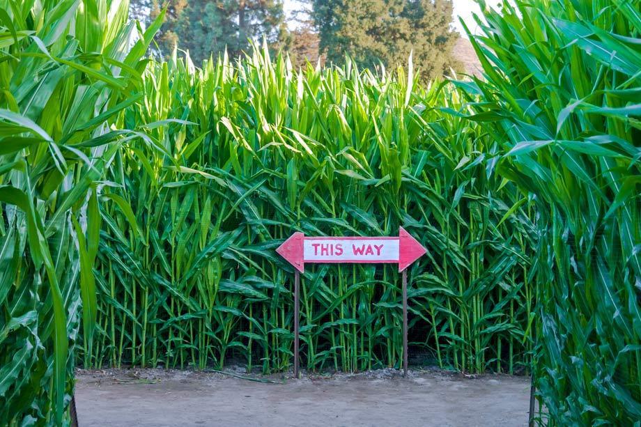 Farm Diversification Maize Maze